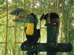 Baby Anteater w/ Friend