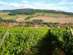 This local vineyard is just a few km from the house; free tours are available.