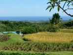 The view over the rice terraces to the Bali Sea. On the lower terrace the infinity pool.