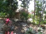Garden is mixed with nursery plants and Jungle plants makes for an interesting Garden