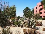 Beautiful Cactus Gardens