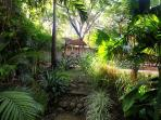 Your Backyard Jungle