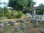 Food Garden, Outdoor Shower and Picnic Table