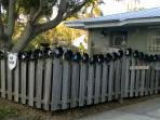 Recycled Vinyl records on the front fence