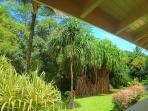 This is the view from the Guest House lanai. My favorite spot on the property.