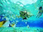 One of the Most Beautiful Snorkeling in Caribbean