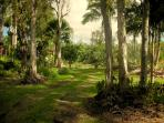 Driveway on 3 acre property to Aloha Lani rental home