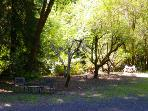 Glen Tara, Spacious Outdoors, Fruit Trees, Year-Round Creek