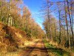 The forestry road above Cwm Broadwell