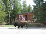 Absaroka Cabin visitor
