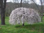 Spring at RiverSong