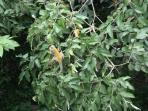 Mono Titi\'s in our trees