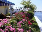 Bouganvilla on our patio facing the intracoastal waterway