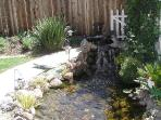 Lovely koi pond with waterfall