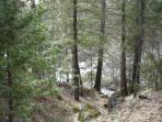 Backyard, Chilnualna Falls Creek
