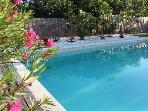 Pool & gardens view