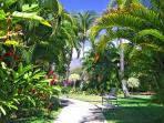 Maui Banyan Tropical Landscaping