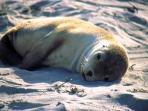Visit Seal Bay to see these beautiful creatures