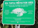 South Beach has Sea Turtle Watching Opportunities