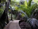Extensive boardwalk through native bush