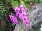 Orchids, frangipani, hibiscus and many other flowers will delight you here!
