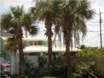 Beautiful Florida Palm Trees