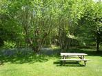 The picnic table in bluebell season