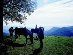 Cataloochee Ranch Horseback Riding