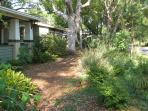 Florida Native Plant Garden pine straw path 2013