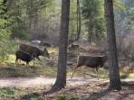 Our friends, the deer, can often be spotted crossing the property.