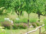 garden and lavanda