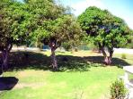 Four huge mango trees provide shade and delicious fruit!