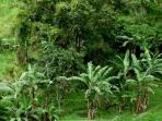 tropical vegetation in our grounds