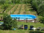 Fiordaliso House - View of the garden and pool