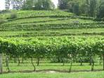 Many mountain vineyards and wineries near by