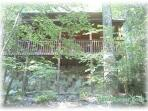 View of the cabin, through the lush trees, as you come up the driveway!