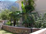 The Banana Tree at the side of the villa
