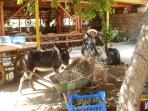 Mum and Baby donkey