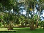 A walk in the gardens