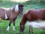 horses from the farm