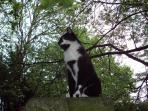 Mocha, the cat
