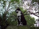 Mocha the cat