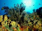 Underwater View of Saba Marine Park