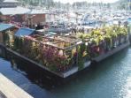 Floating garden in village harbour