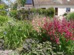 Penstemmons in the pretty garden
