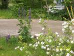 Wild flowers by driveway