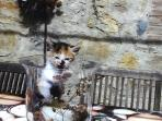 'clio' the kitten