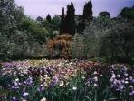 Florence iris show in may