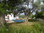 Lovely shady hammock spot under the old gnarled olive trees