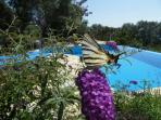 Beautiful butterflies flutter around the pool and terraces.